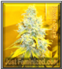 Power Skunk Feminized Mix & Match Seeds